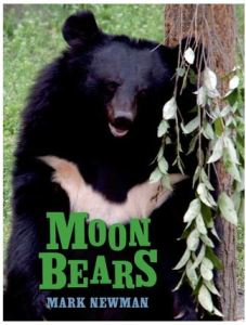 Newman Moon Bears